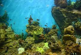 موجة جديدة في علم الأحياء البحرية
